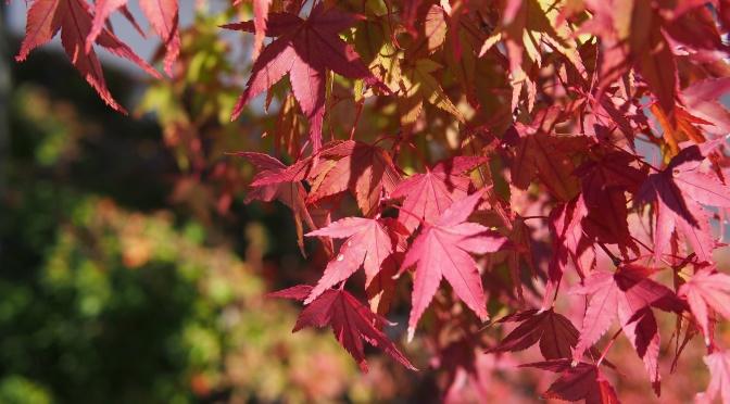 【即時紅葉。持續更新】日本北陸、中部秋季紅葉照片(2015.10) 《中卷》