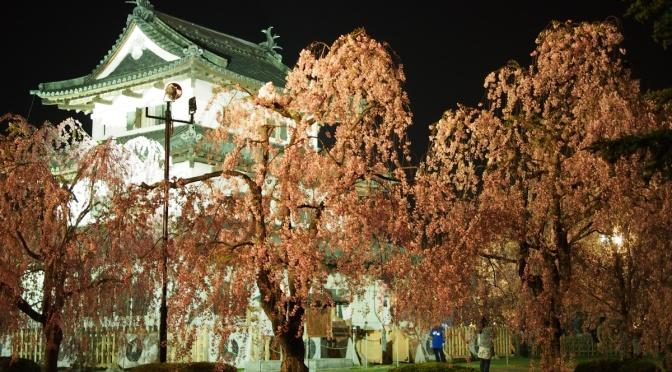 2017 日本東北追櫻:弘前 弘前公園(夜櫻)
